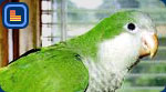 parrots (8k image)